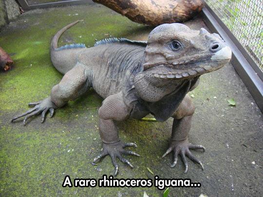 What a cute dinosaur…
