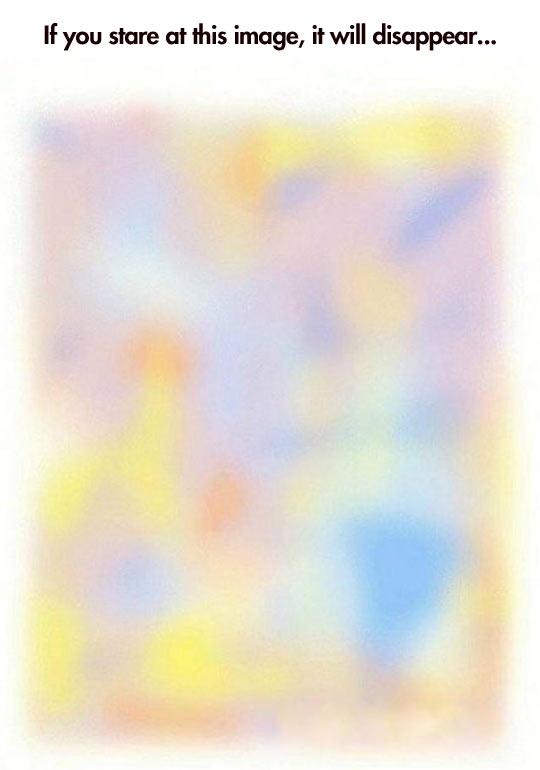 funny-image-disappear-optical-illusion