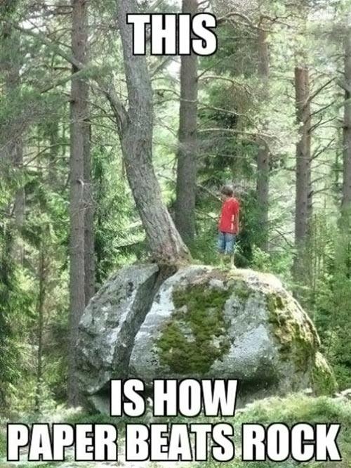funny-kid-rock-tree-beats