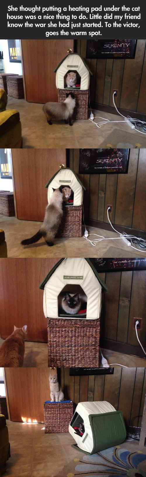 funny-kitty-kitten-cat-king-house
