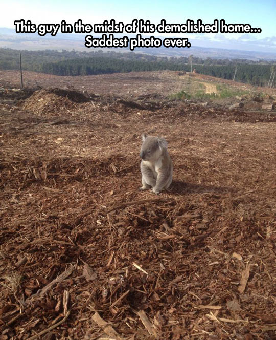 funny-koala-photo-home-lonely