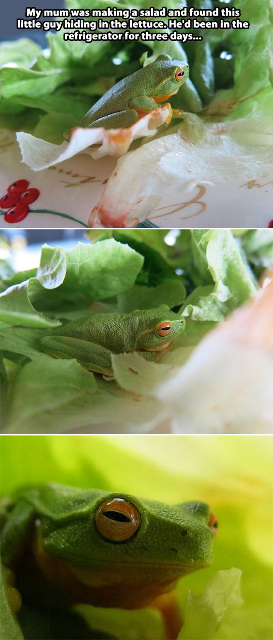 funny-lettuce-frog-cute-refrigerator