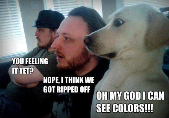 funny-men-dog-tripping-colors