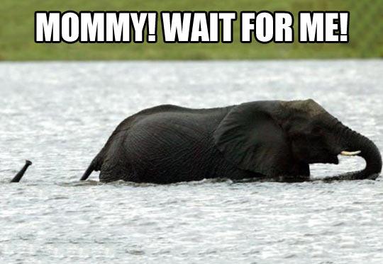 funny-mom-baby-elephant-lake