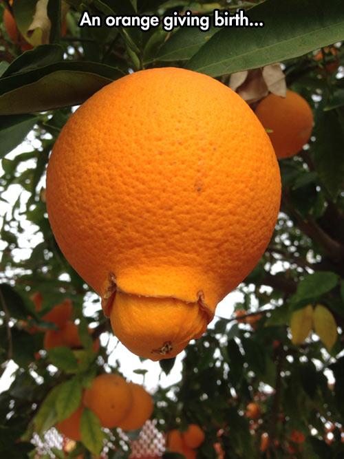Orangeception…
