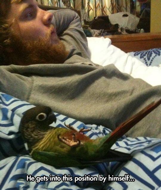 Watching Netflix with my bird…