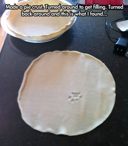 The mysterious paw print…
