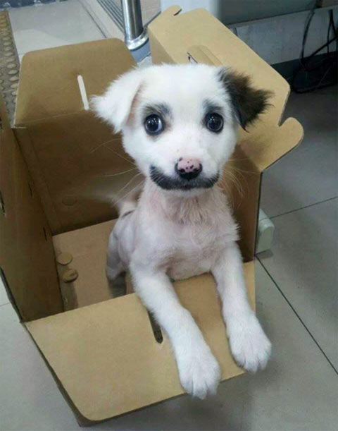 funny-puppy-dog-smile-face