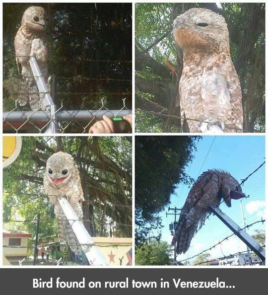 funny-rural-town-Venezuela-bird