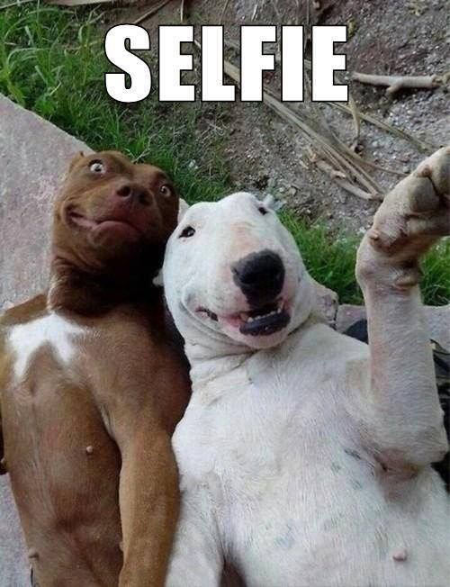 funny-selfie-dogs-smiling