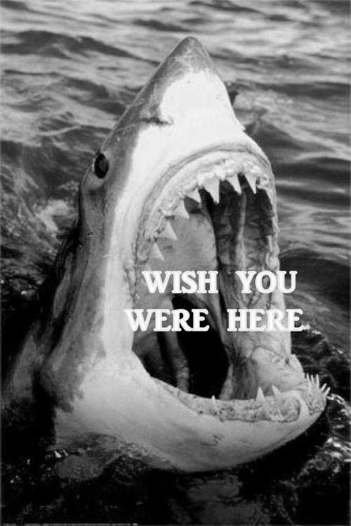 funny-shark-jaws-ocean-wish-here