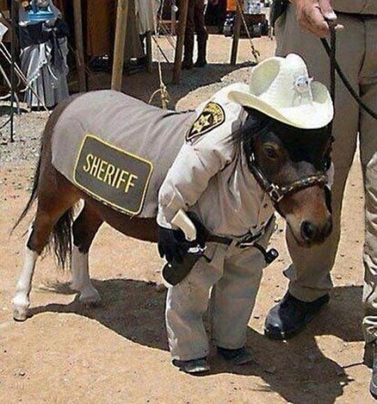 Sheriff donkey…