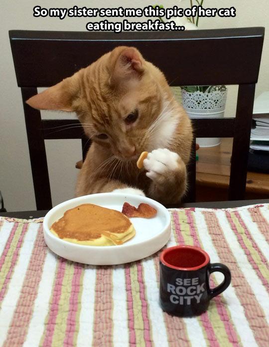 funny-sister-cat-pancake-coffee