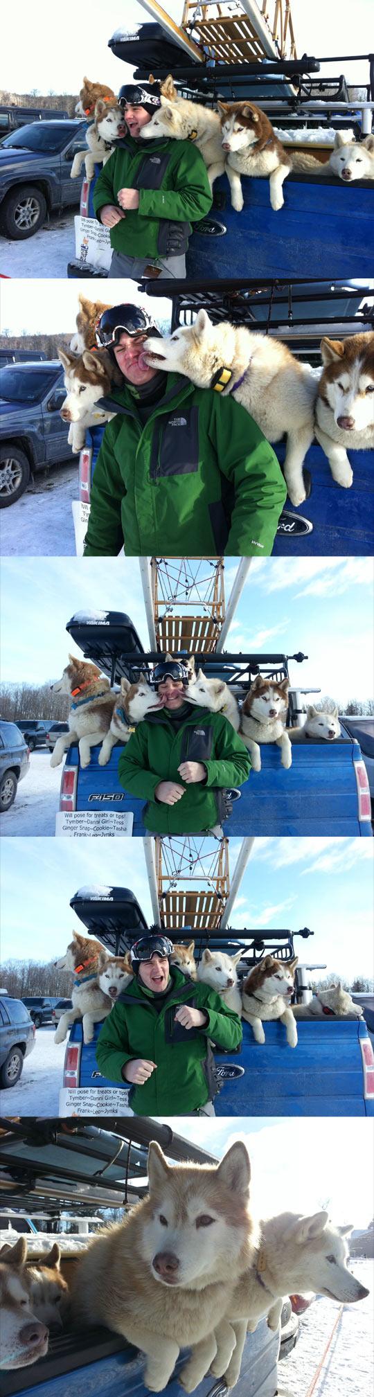 funny-sled-dog-Husky-licking-truck