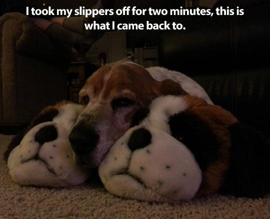 funny-slippers-dog-sleeping-shape