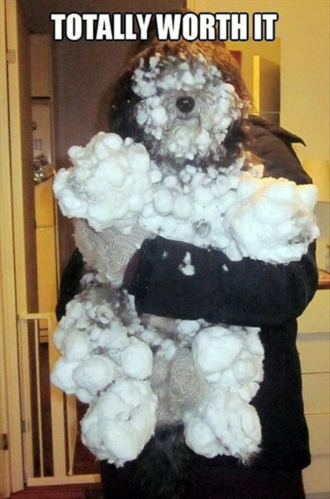 funny-snow-dog-cover-ice-fur