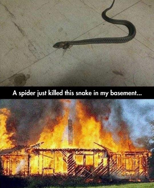 funny-spider-snake-basement-fire-house
