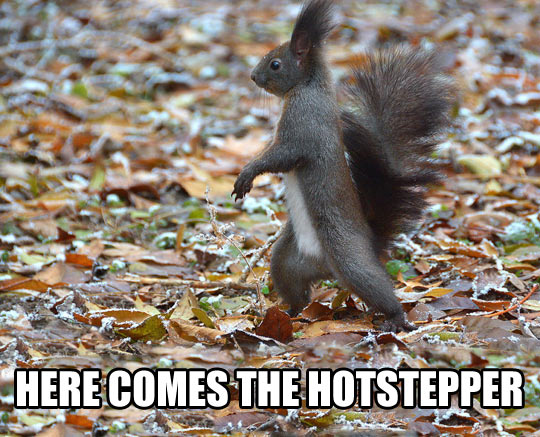 Squirrel is in da house…