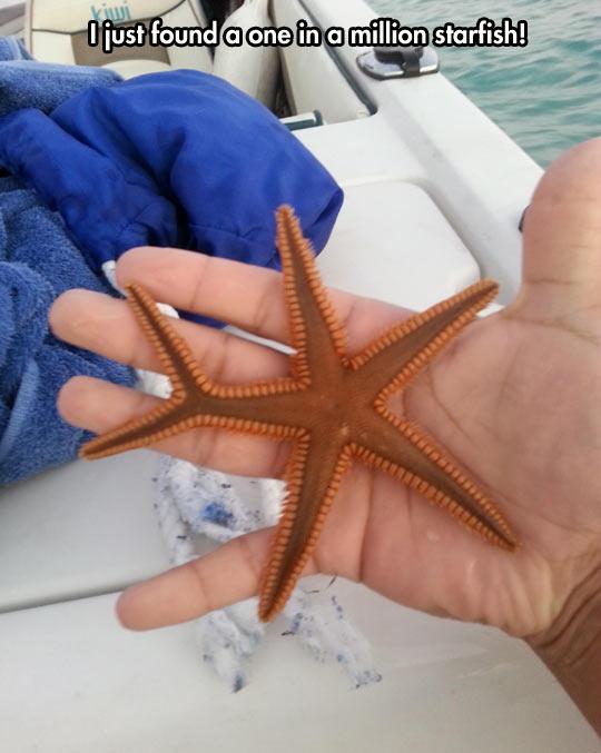 Strange starfish…