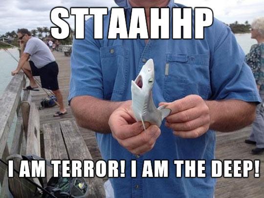 funny-tiny-shark-fishing-port