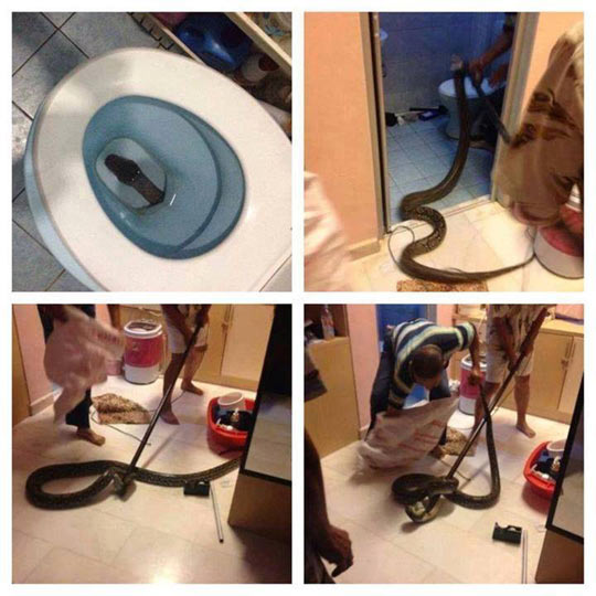 funny-toilet-snake-bathroom