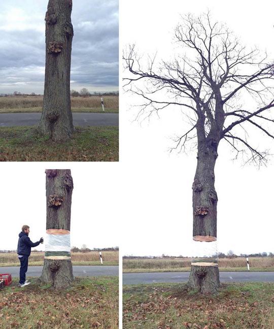 Creative art involving a tree…