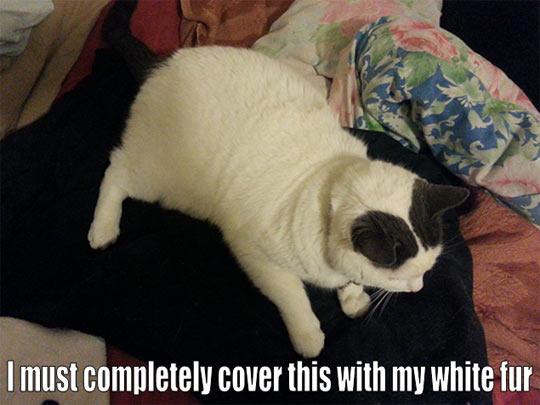 funny-white-kitten-black-fur
