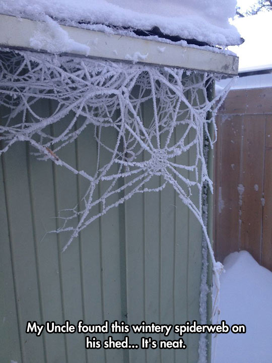 funny-winter-uncle-spiderweb-house