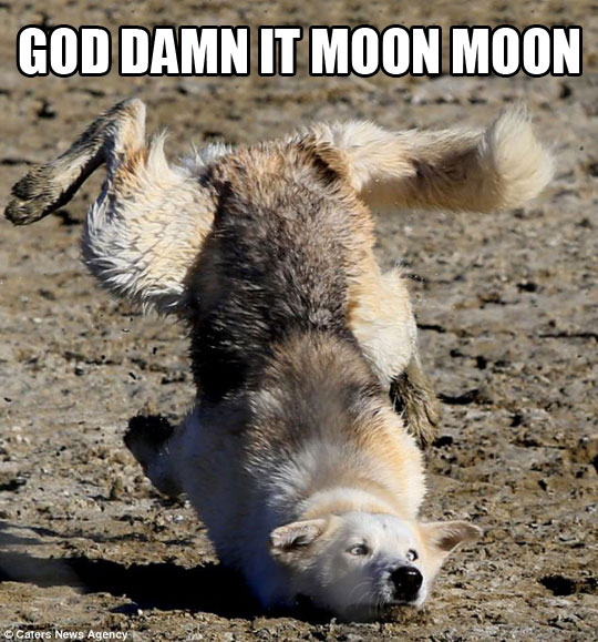 Moon Moon is at it again…