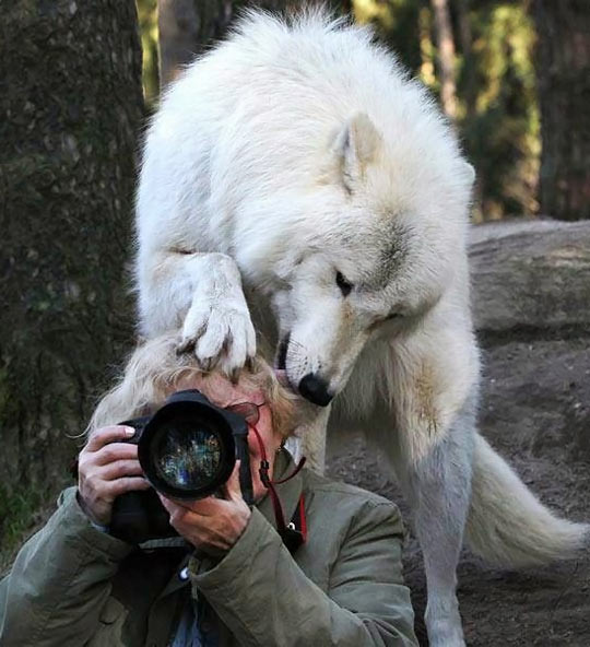 funny-wolf-forest-photographer-picture