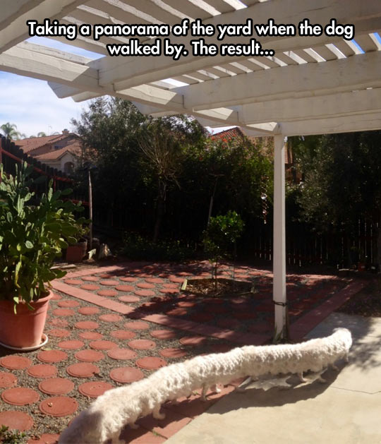 funny-yard-patio-dog-panoramic