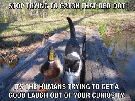 Advice Mallard meets cat
