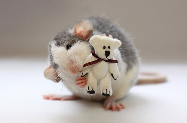 Rats-with-Teddy-Bears-16