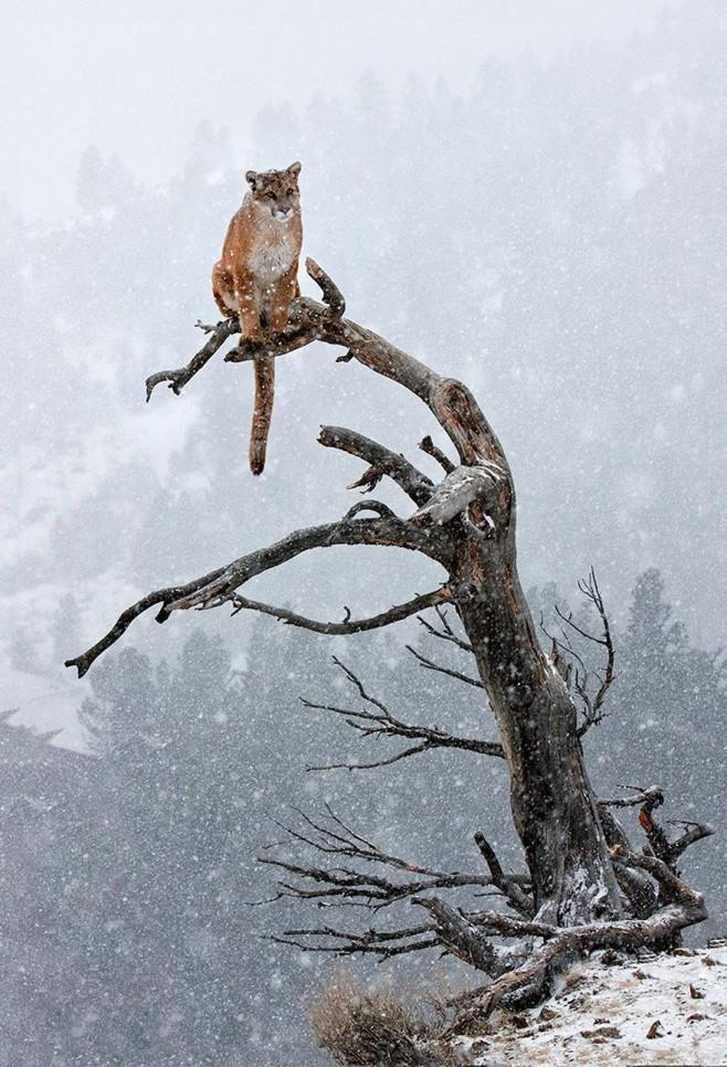 animals-in-winter-13