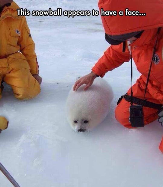 cool-baby-polar-bear-white-snow