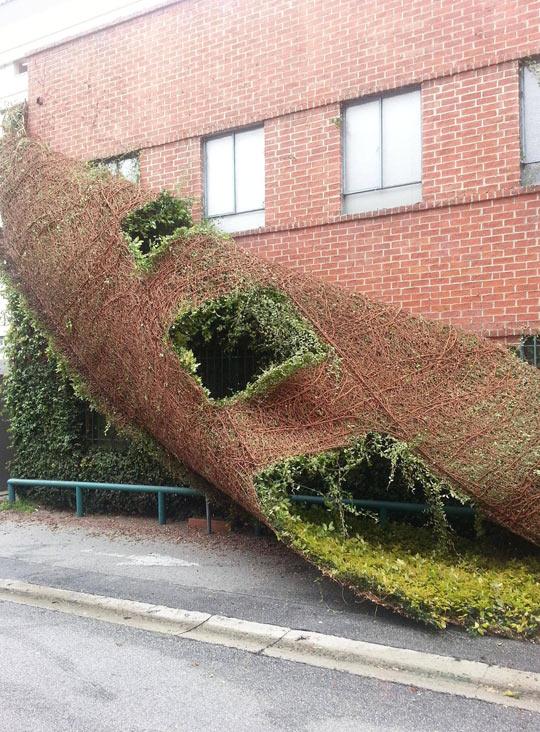 A building shedding like a snake…
