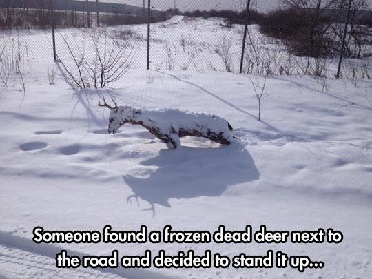 cool-frozen-dead-deer-road-snow