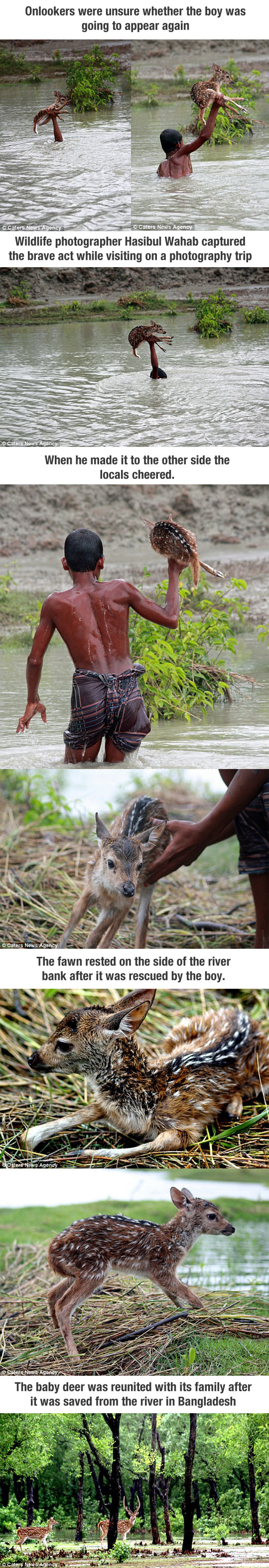cool-kid-rescue-baby-deer