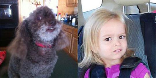 I think this dog nailed it…