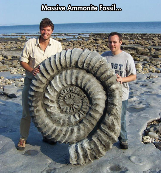 Praise the helix fossil…