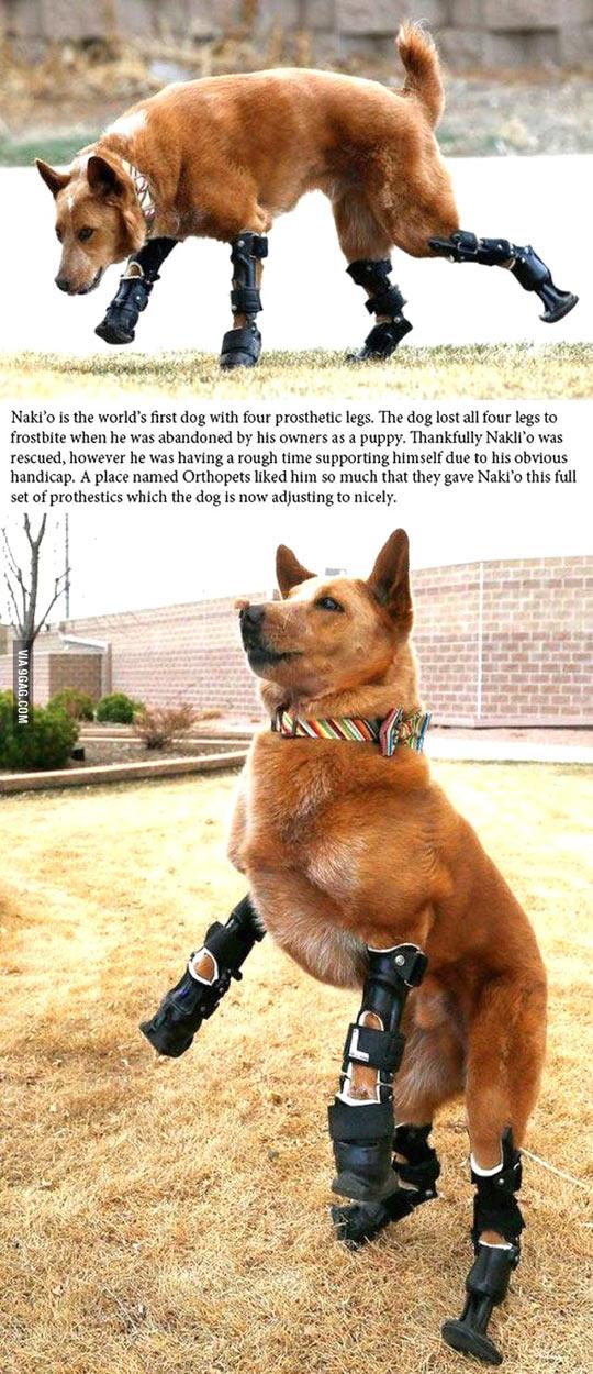 cool-prosthetic-leg-dog-puppy