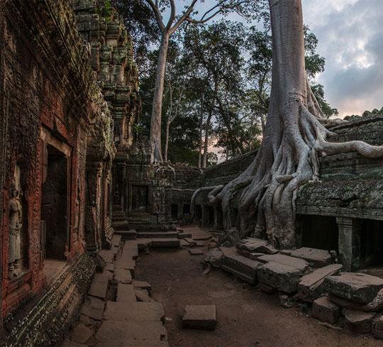On stones trees grow…