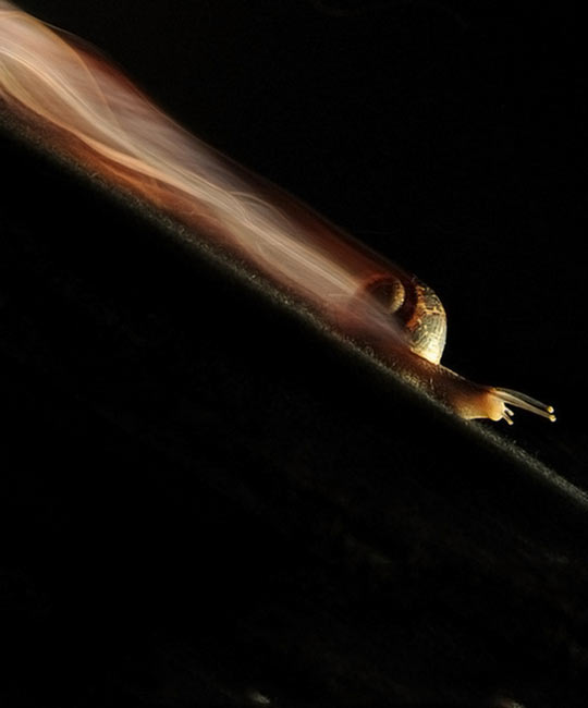 Long exposure of a snail…
