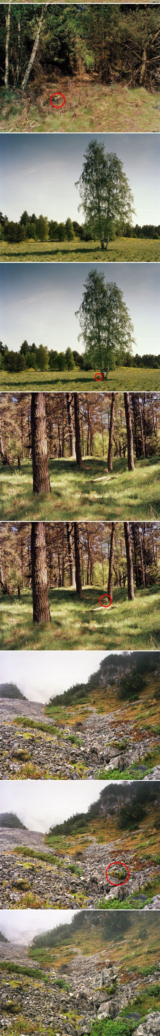 cool-sniper-camouflage-forest-trees-hidden