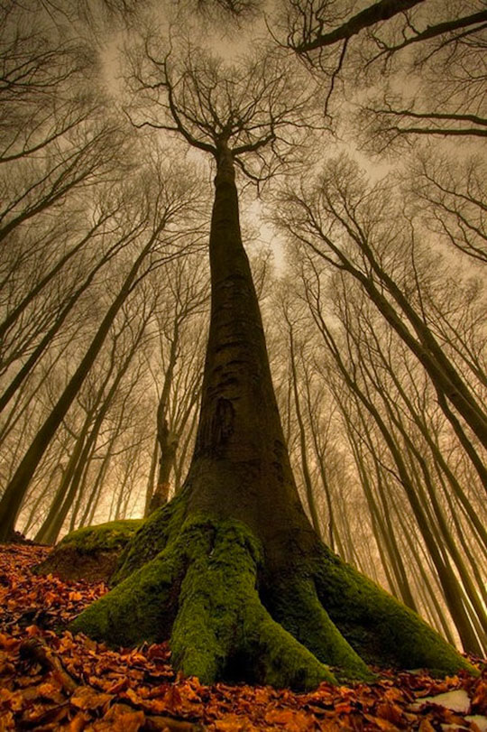 cool-tree-root-leaves-forest