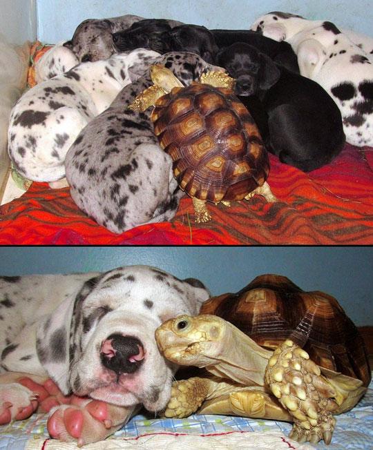 cool-turtle-puppies-love-sleeping-species