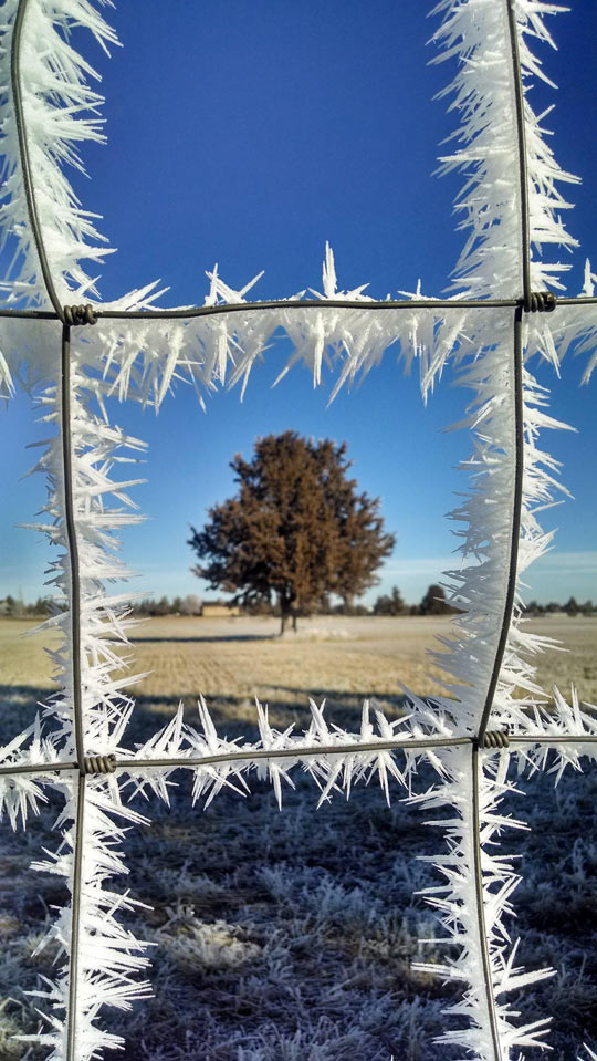 Ice crystals on a fence…
