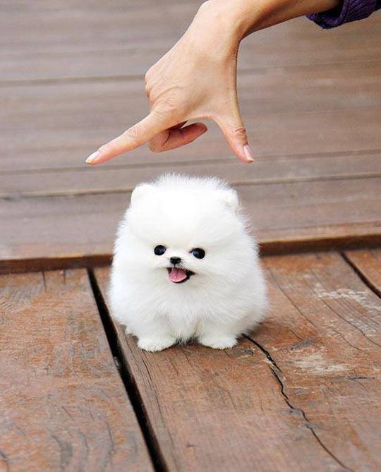 cute-baby-dog-puppy-fluffy