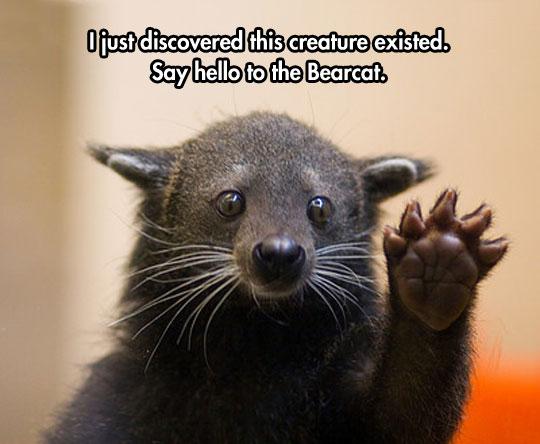cute-bear-cat-animal-weird