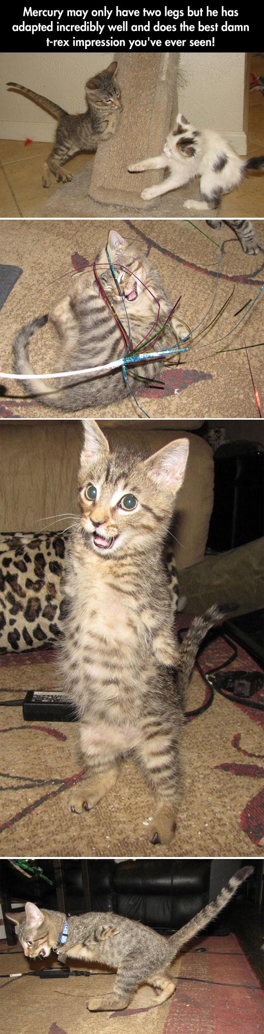 cute-cat-no-legs-playing